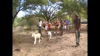 Walking With White Lions at Casela Safari Park, Mauritius, 2012