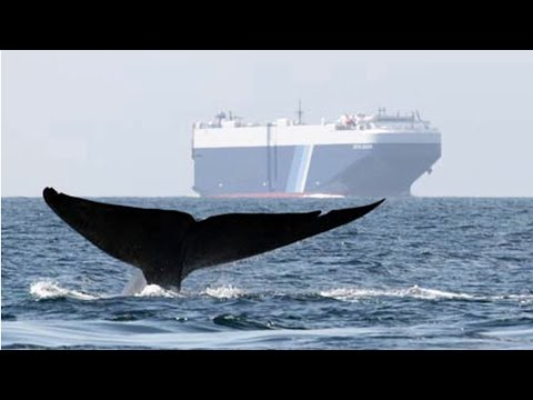 Ships vs. Whales - BLUE 2014: Conservation Innovation & Solutions Finalist