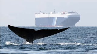 ships vs whales blue 2014 conservation innovation solutions finalist