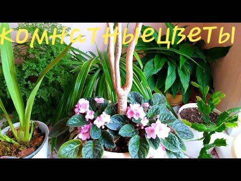 Комнатные цветы 5 сентября Драцена после обрезки Орхидеи после пересадки
