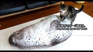 伝説のマッサージ師まるとあざらし。-Legendary masseur Maru & the seal.-
