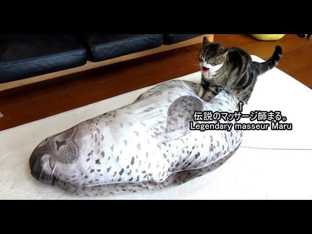 伝説のマッサージ師まるとあざらし-legendary-masseur-maru-the-seal