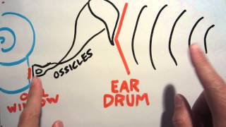 Why ears pop on airplanes (and how to hear someone else's pop!)
