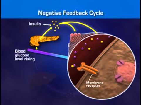 A Hormonal Control of Blood Glucose