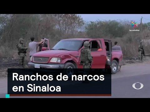 Inseguridad: Ranchos de narcos en Sinaloa - Denise Maerker 10 en punto