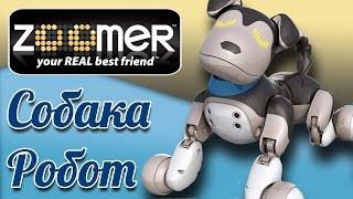 Интерактивная игрушка собака робот Зумер (Zoomer toys) - видео для детей
