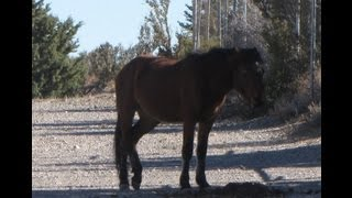 Wild Horses in Cold Creek, NV NW of Las Vegas | Debbie Drummond, Vegashomepro