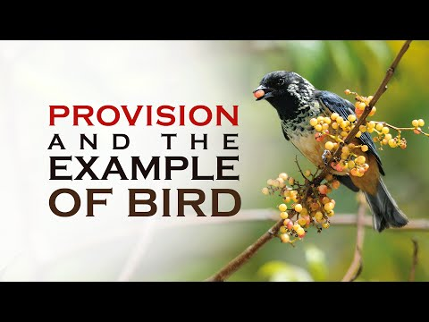 Provision and the example of bird