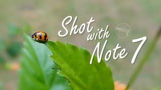 لقطات فيديو مميزة من كاميرا سامسونج نوت 7 الجديد