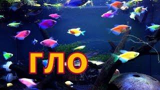 Аквариум с яркими рыбками дома. Маленький аквариум