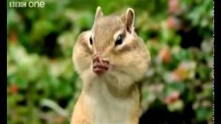 Beatboxing Squirrel Chipmunk Long Beat (best version) Funny Animals  Alan Al Steve