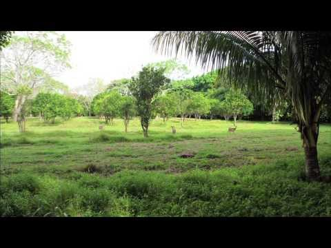 Luscious Nicaraguan Land for Sale (Santiago Real Estate Nica