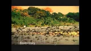 Brazil Ecotourism,Adventure Vacations,Tours & Travel Videos