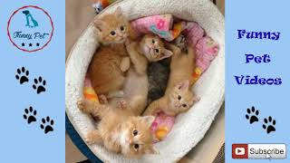 Funny Cat Videos For Kids ✅ Funny Cat Videos For Kids' To Watch ✅ Funny And Cute Cats Compilation