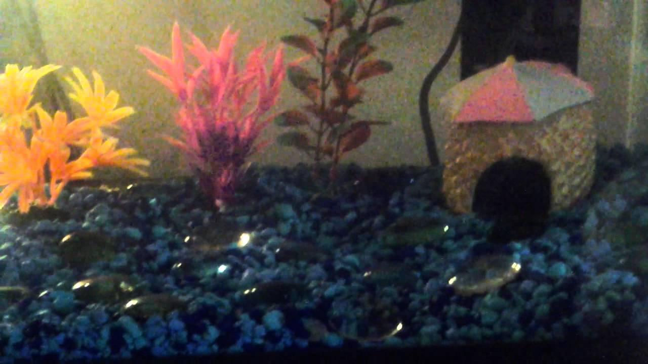 Freshwater fish for aquarium petsmart - 3 New Fish From Petsmart Comment Names The Fish