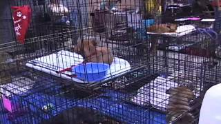 Dogs and Cats at the Pet Expo