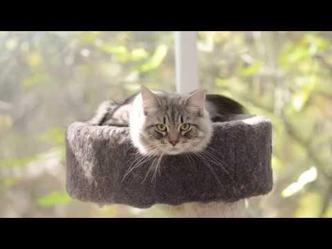 Siberian cat Frosty turns 3