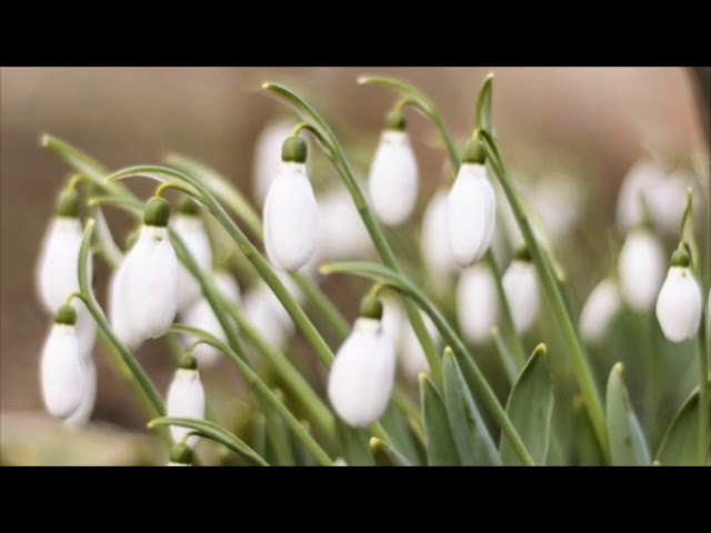 Изображение предпросмотра прочтения – АзаматСадиров читает произведение «Весна (Уж тает снег...)» А.Н.Плещеева