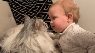 Cutest Baby Learns to Kiss The Cat! (CUTEST VIDEO EVER!)