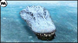 Никогда не Вытаскивайте Замерзшего Крокодила изо Льда
