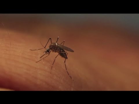 FDA wants blood donations tested for Zika virus