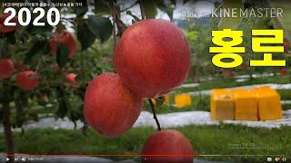 [사과재배]깔이 이렇게 좋을수가/산상농원을 가다
