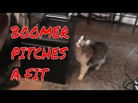 BOOMER PITCHES A FIT
