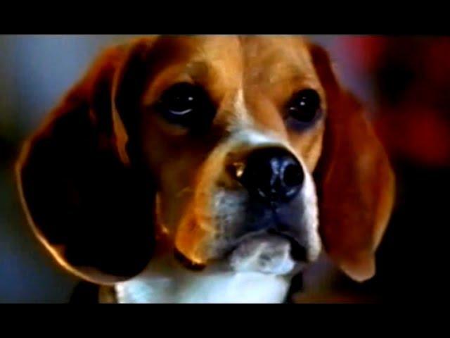 Cats & Dogs - Wie Hund und Katz' - Trailer (2001)