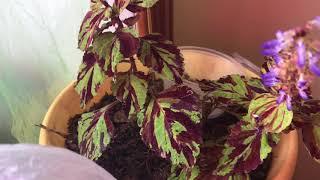видео 10 вьющихся комнатных растений: фото и названия для цветоводов-новичков