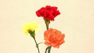 Flower TV ではお家でフラワーアレンジメントがレッスンできるムービー...