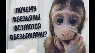 Почему обезьяны не эволюционируют в людей? | Факты о животных