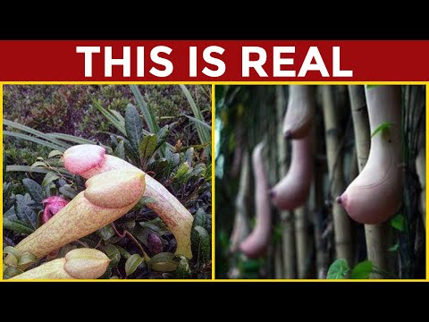 The Most Beautiful Trees In The World | Braintastic Specials from YouTube · Duration:  7 minutes 27 seconds