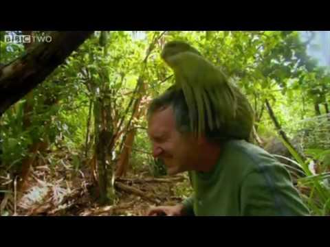 Galvao Bird Gets His Freak On!