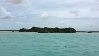 La isla de los pájaros