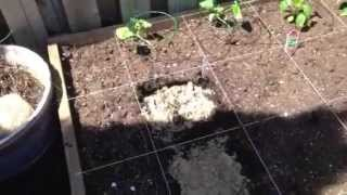 Getting Garden Bed Soil Ready for Planting Carrots - How to Prepare Soil For Carrots