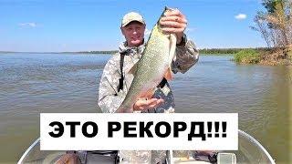 КРУПНЫЙ ЖЕРЕХ. ЭТО РЕКОРД!!!