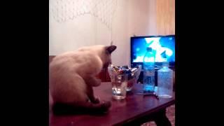 Кот пьет воду из стакана лапой