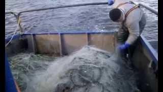 Курильские Острова - Видео №8 - Рыбалка продолжается(, 2015-07-21T00:13:42.000Z)