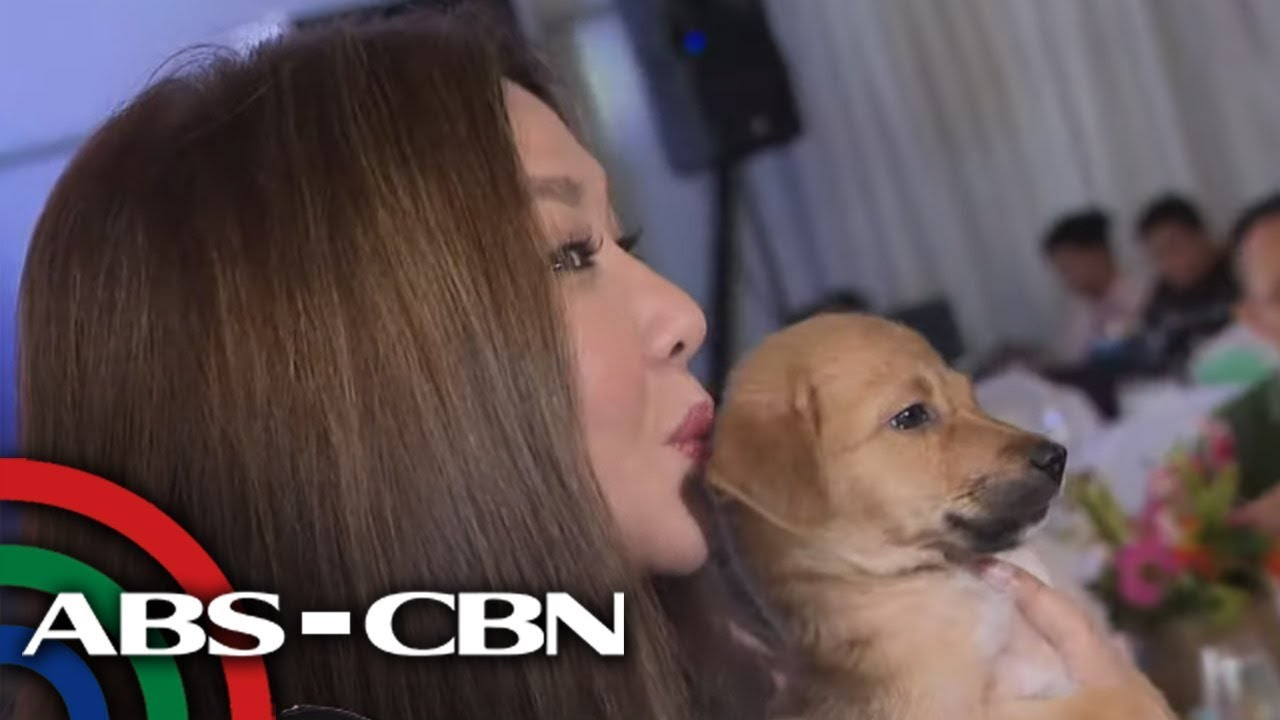 'International Homeless Animals' Day' pinagdiwang ng celebrities, advocates | TV Patr