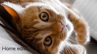 Один день кота Наш КОТ Funny Cats