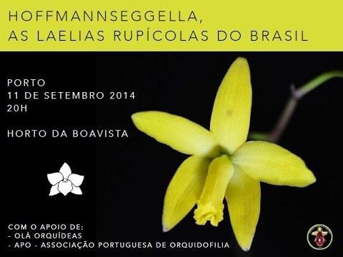 Orquídeas: Hoffmannseggella, as Laelias Rupícolas do Brasil - Parte 3