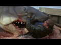 Killers of the Deep Blue Sea - The Sea Monsters | Documentary Channel