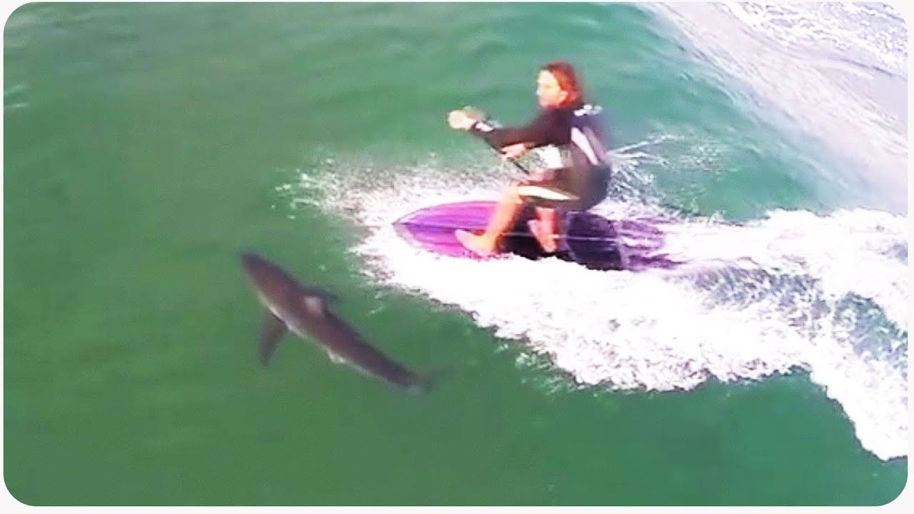 Paddleboarder Nearly Runs Over Shark | Close Call