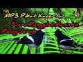 Suara Pikat Burung Manintin Kacer Air Suara Panggilan Paling Jernih  Mp3 - Mp4 Download