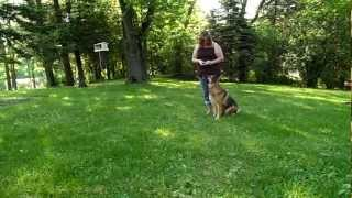 Angel (my German Shepherd) Demonstrating Basic Dog Obedience