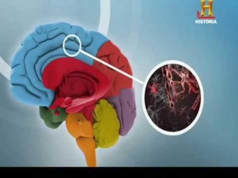 [1]-el-cerebro---parte-5-de-5--