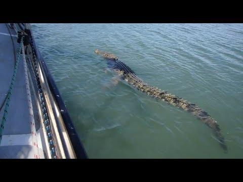 How to Fish with Crocodiles - Free Range Sailing Ep 13