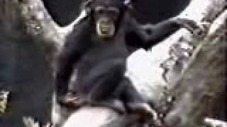 Stinkefinger Affe