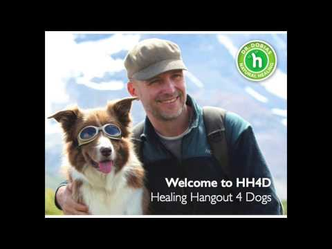 Introduction to Holistic Healing for Dogs