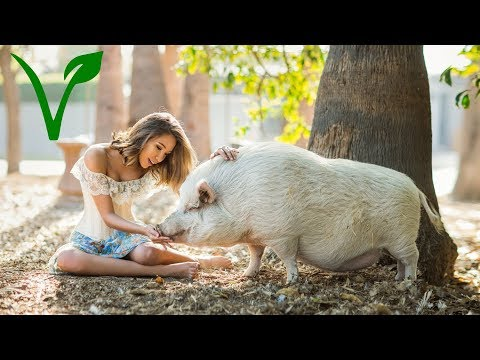 Photoshoot with Kalel at Farm Sanctuary, Behind The Scenes